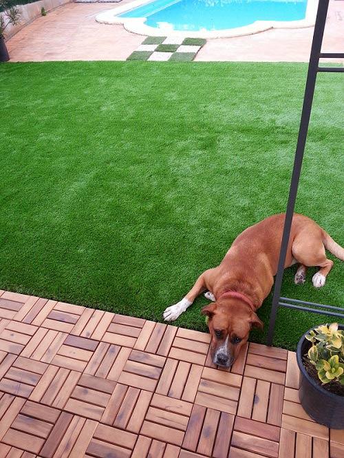 Cesped artificial mascotas. Nuestro Lima 40 para perros