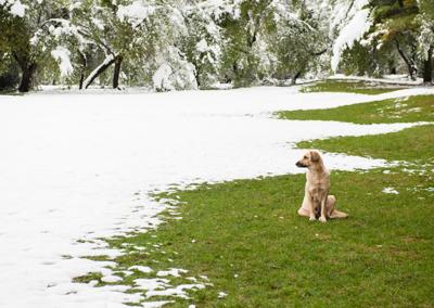 ¿Se pude instalar césped artificial durante el invierno?