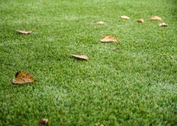 ¿Qué cuidados necesita nuestro césped artificial durante el otoño?