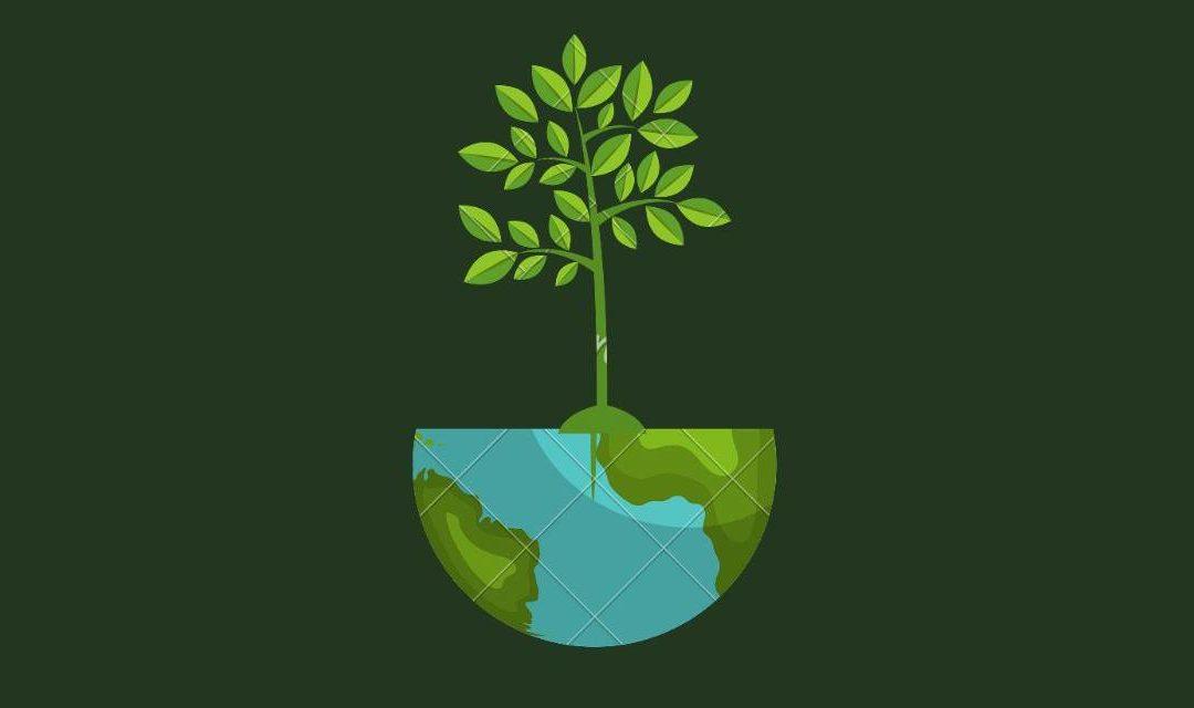 Césped artificial y su impacto medioambiental.
