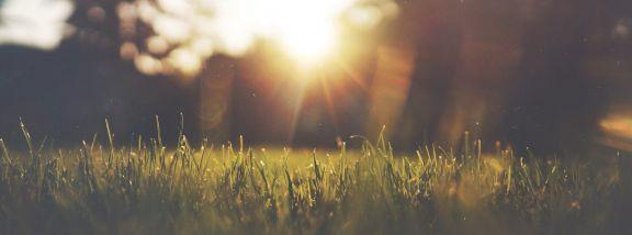 ¿Puede el calor dañar nuestro césped artificial?